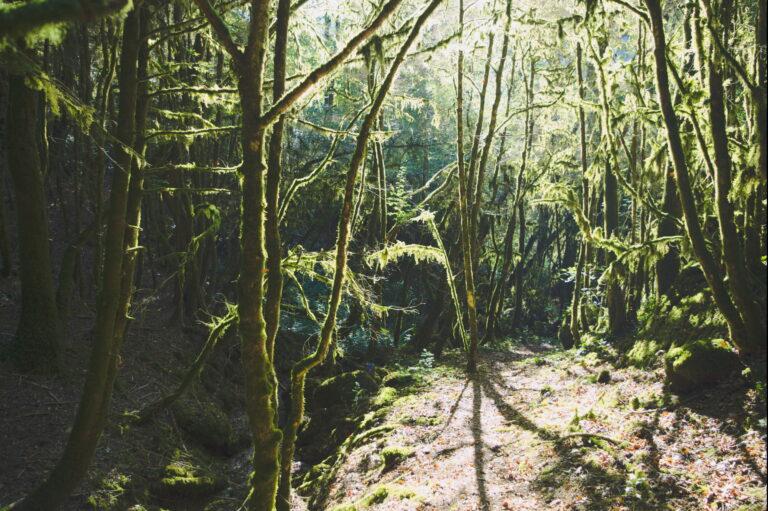 Randonnée dans le Tarn (81) : la vallée sauvage du Dadou
